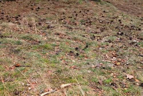 Forest Floor Pine Cones Autumn Colours Nature