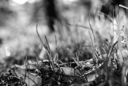 Forest Floor Grass Forest Leaves