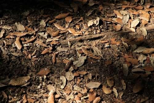 Forest Floor Leaves Autumn Ground Dust Dirt Earth