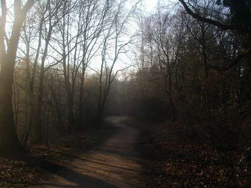 Forest Path Morning Sun Haze Forest Atmospheric