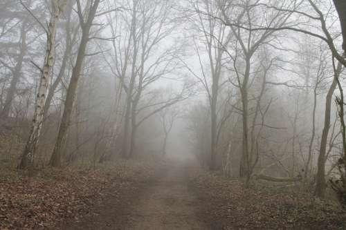 Forest Path Fog Trees Landscape Lane Forest