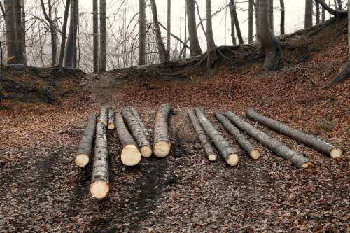 Forestry Forest Wood Rods Strains Wooden Poles