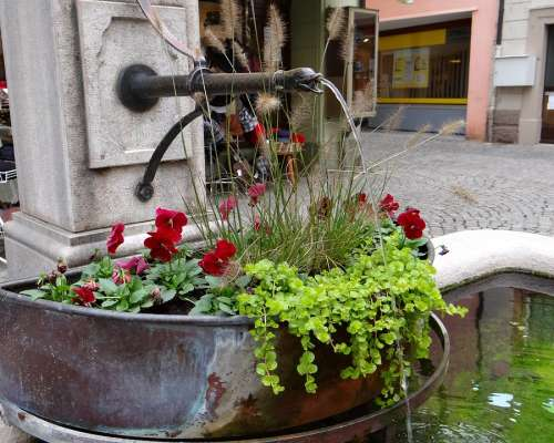 Fountain Flowers Red Green Bucket Water Jet