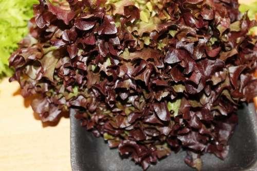 Friseesalat Red Salad Vegan Vegetarian Fresh