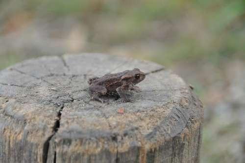 Frog Amphibian Outside Wildlife Close-Up Nature