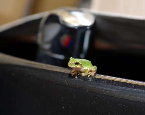 Frog Tree Frogs Amphibians