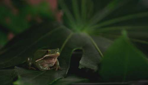 Frog Animal Pet Toad Water Amphibian Nature