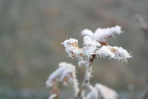 Frost Winter Cold Plant