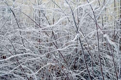 Frozen Tree Ice Nature Macro Branch Cloudy Cloud