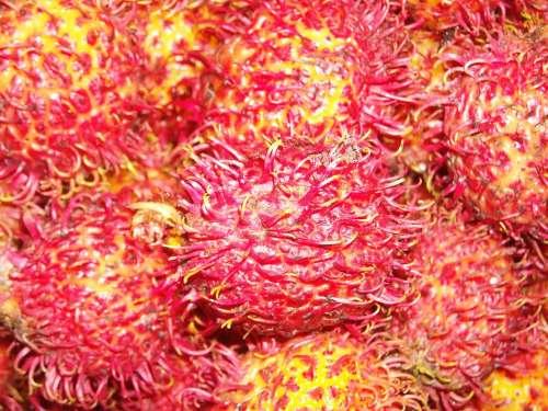 Fruit Rambutan Red Yellow