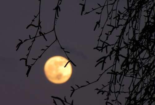 Full Moon Moon Birch Dusk