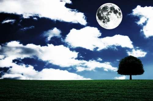 Full Moon Landscape Fantasia Tree