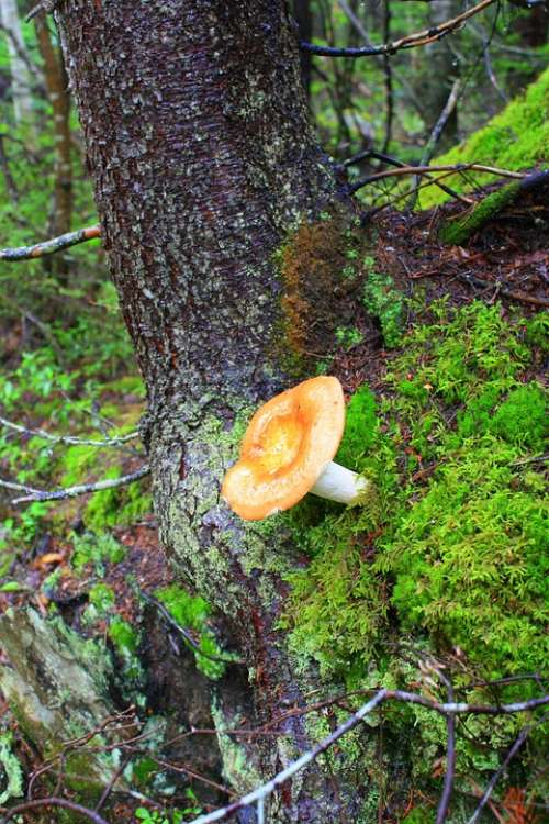 Fungus Nature Forest Mushrooms Fall Forest