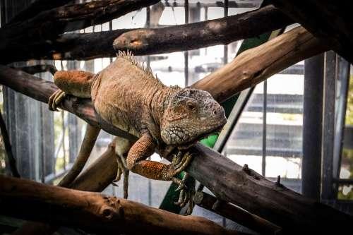 Gad The Lizard Animal Zoo