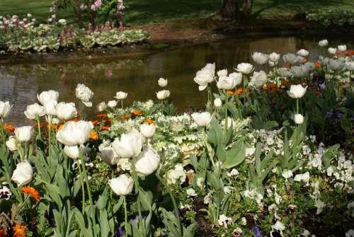 Garden Pond Flowers White Spring