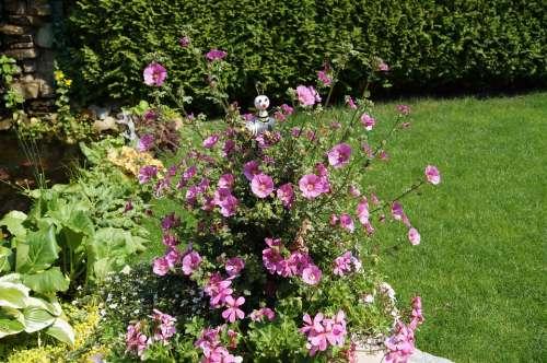 Garden Mallow Kitsch Flowers Pink Mallow