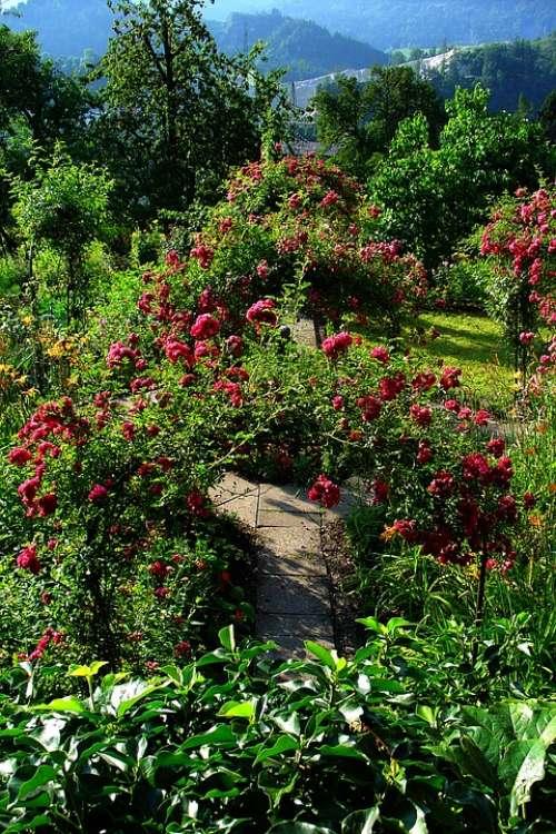 Garden Summer Arch