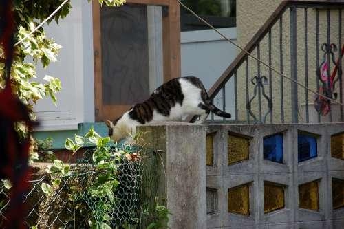 Garden Hof Cat Summer