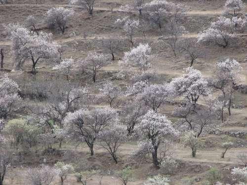 Garden Trees Spring Landscape Beauty Leaves
