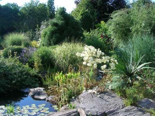 Garden Flowers Nature Plant Pond White Flowers