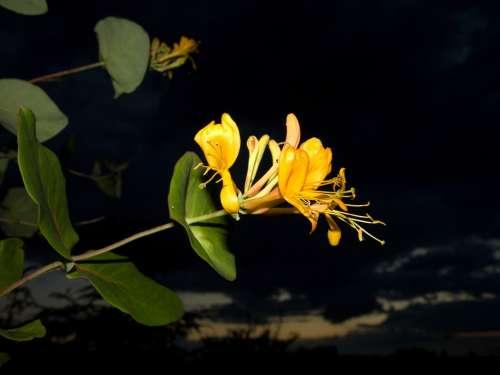 Garden Autumn Nature Plant Flower