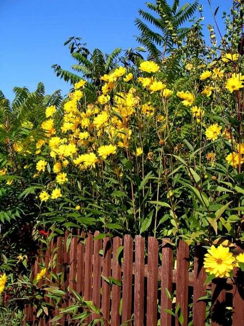 Garden Fence Summer Flora Plant Nature Flowers