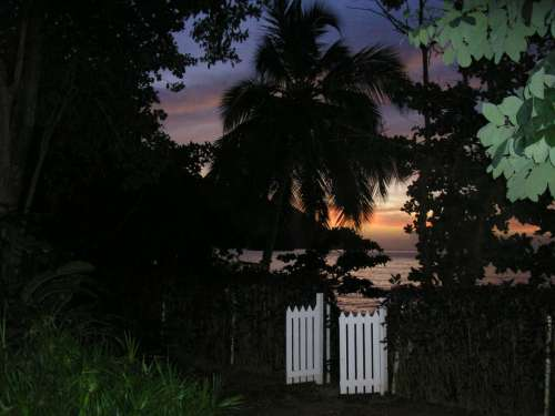 Gate Night Outdoors Sunset Leaves Beach Palm Tree