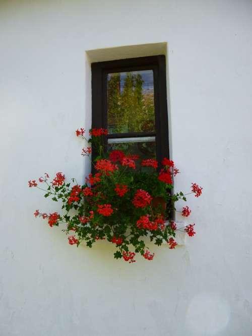 Geranium Window Red Flower
