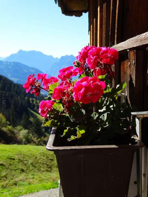Geranium Mountain Hut Mountain World Foresight