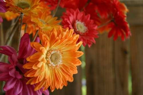 Gerber Gerber Daisy Bouquet Pink Orange Flowers