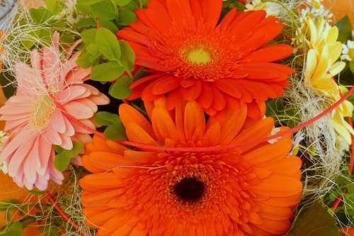 Gerbera Flowers Birthday Bouquet Bouquet Orange