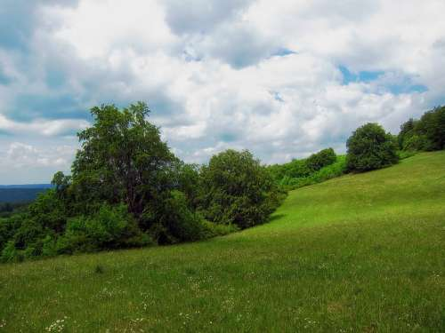 Germany Meadow Landscape Scenic Summer Trees