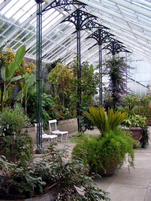 Glasshouse Greenhouse Plant Hothouse Horticulture