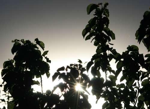 Glistening Sun Late Sun Foliage Silhouette Sky