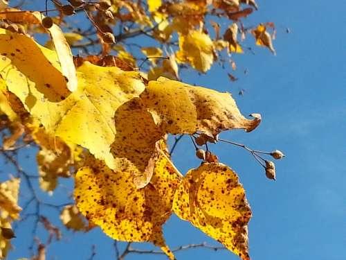 Golden Golden October Azure Golden Leaves