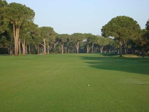 Golf Course Golf Meadow Sport Rush Trees Green