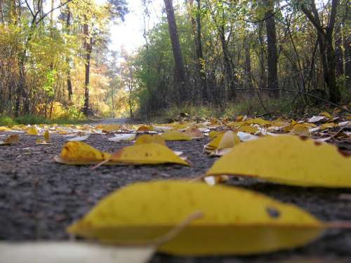 Gone With The Wind Road Forest Floor Leaves Autumn
