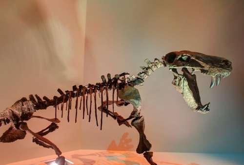 Gorgon Dinosaur Skeleton Bones Fossils Prehistoric