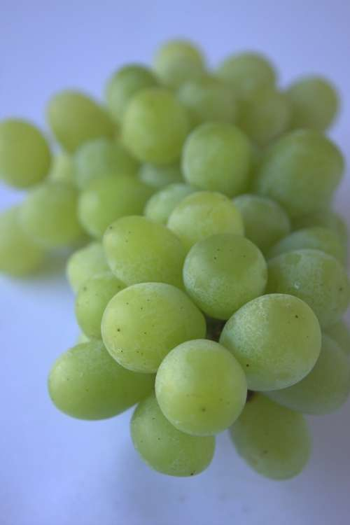 Grapes Green Food Healthy Fresh Fruit Harvest