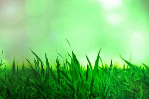 Grass Background Nature Natural Sun Sunshine