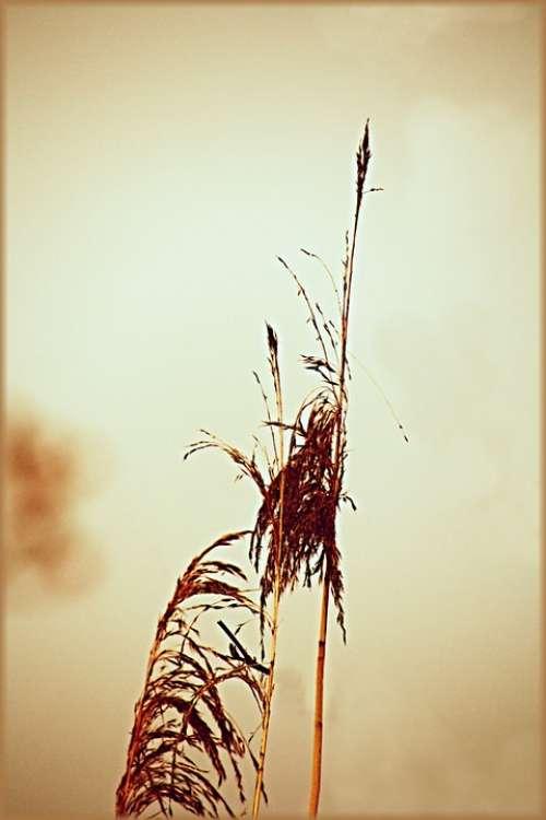 Grass Lake Nature