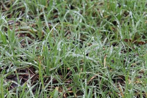 Grass Nature Dew
