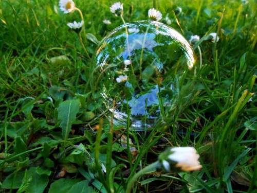 Grass Daisy Daisies Foliage Straws Bubble Small
