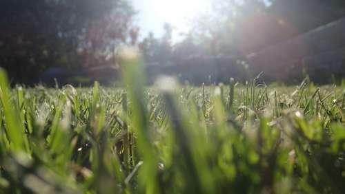 Grass Straws Sun Spring Summer Green Lawn