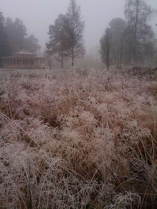 Grass Frost Bureå Mist