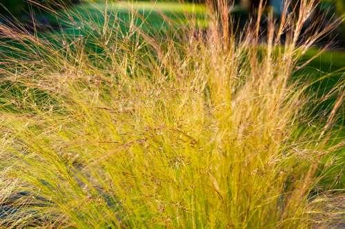 Grass Backlighting Halme Girl Hair Blades Of Grass