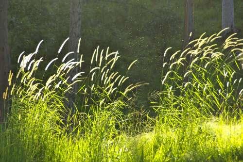 Grass Green Scene Pasture Sunlight Natural Light