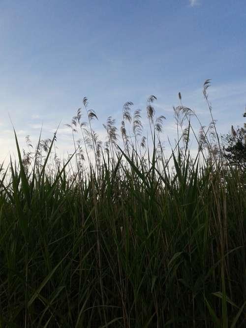 Grass Sky Nature
