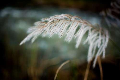Grass White Breeze Field Spring Summer Outdoor