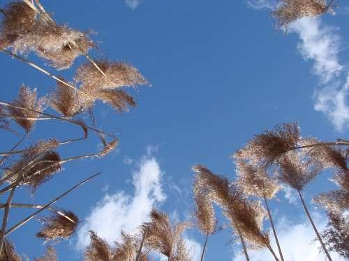 Grass Tall Upward Reaching Sky Spring Landscape
